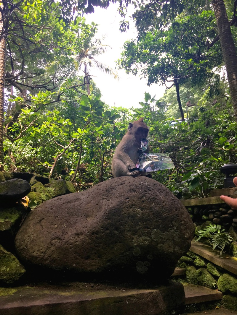 monkey forest ubud ticket destroyed
