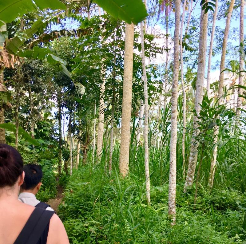 Taro jungle ubud bali