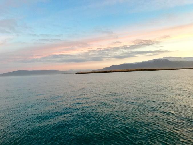 sunrise whale watching elding iceland
