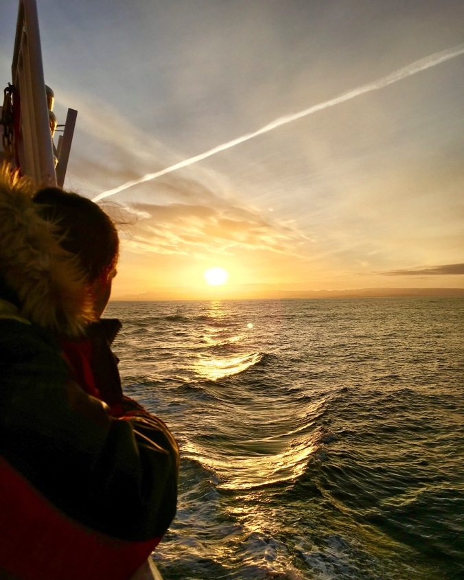 sunrise whale watching elding iceland