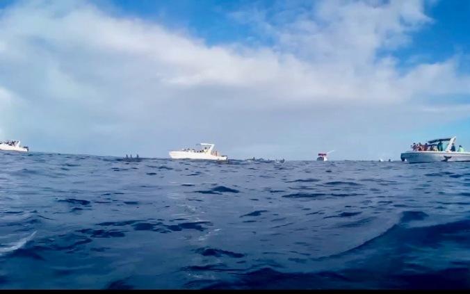 dolphin boat trip to Tamarin bay, mauritius